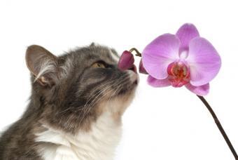 https://cf.ltkcdn.net/cats/images/slide/89951-847x567-cat-smelling-flower.jpg