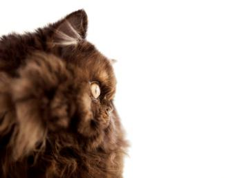 https://cf.ltkcdn.net/cats/images/slide/89966-797x602-side-view-chocolate.jpg