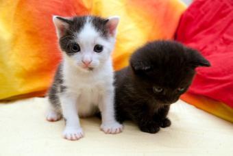 https://cf.ltkcdn.net/cats/images/slide/89980-847x567-little-kittens.jpg