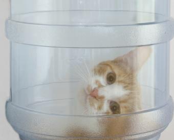 https://cf.ltkcdn.net/cats/images/slide/90009-800x647r2-Cat_in_a_bottle.jpg