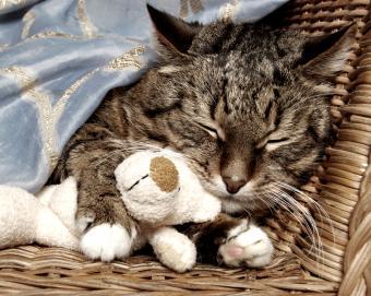 https://cf.ltkcdn.net/cats/images/slide/90010-800x638r2-Cat_snuggling_teddy.jpg