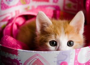 Kitten in a pink box