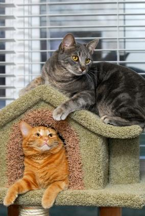 How to Build a Cat House | LoveToKnow