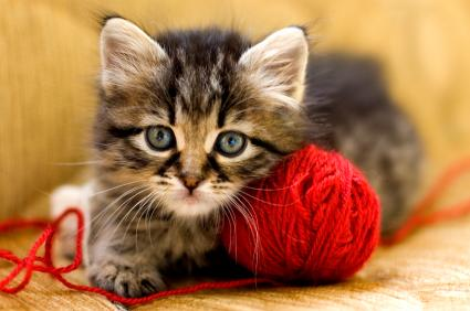 Kitten with yarn
