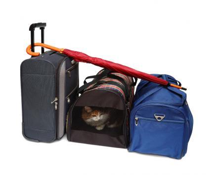 Cat in a travel bag