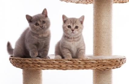 Kittens sitting on a scratching post platform