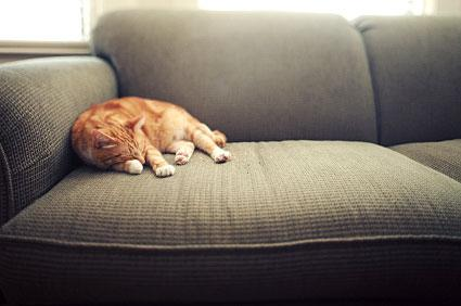 Cat lounging on sofa