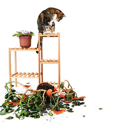 cat destroying plants