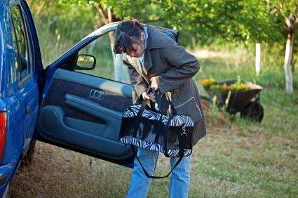 Woman putting cat carrier in the car