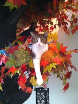 A Hidden Hollow Fantasy Forest cat tree