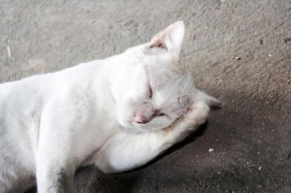 disoriented cat