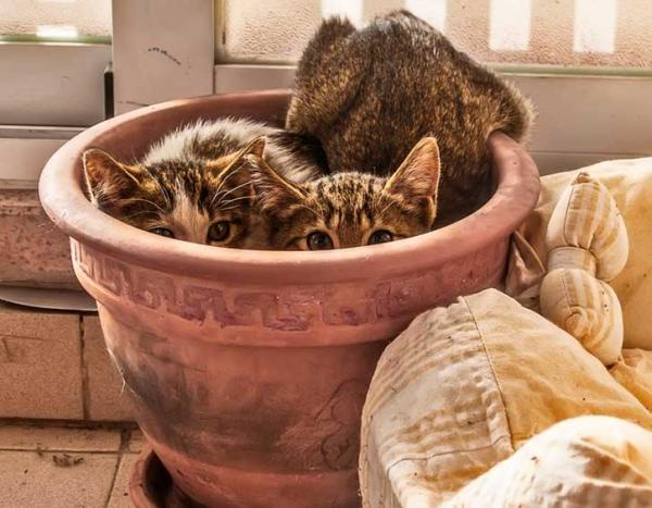cats hiding in terra cotta pot