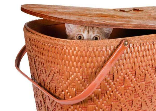 cat hiding in picnic basket