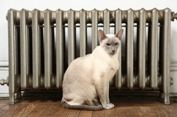 cat by radiator