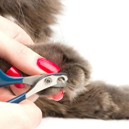 Cat having its nails trimmed