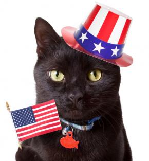 stars and stripes cat