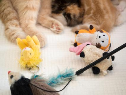 Cat paws with toys