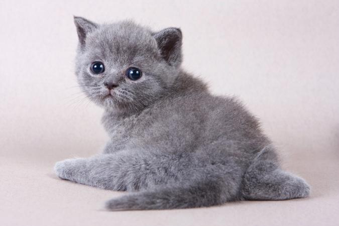 Dealing With a Kitten With a Bad Odor | LoveToKnow