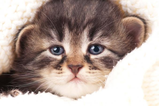 gassy kitten