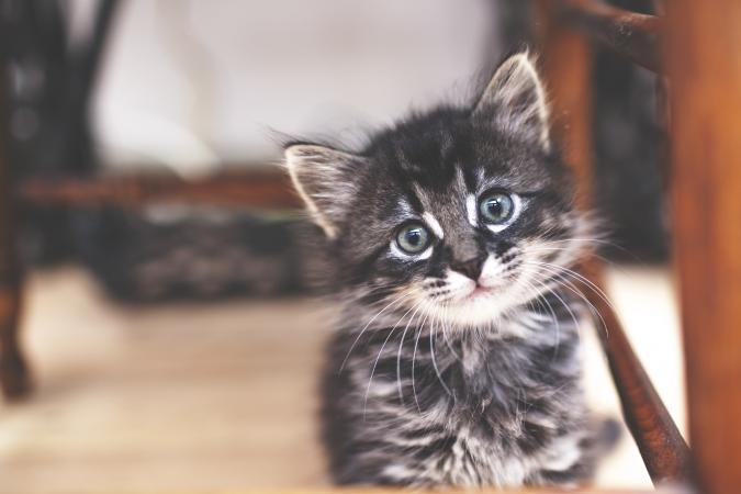 293 Cute Kitten Names Lovetoknow