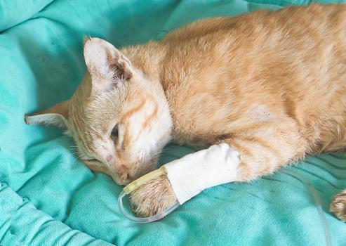 End Stage Feline Kidney Disease Lovetoknow