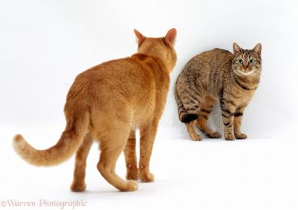 constipation in cats treatment