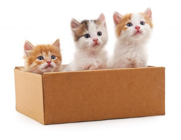 Where to Adopt Kittens for Free