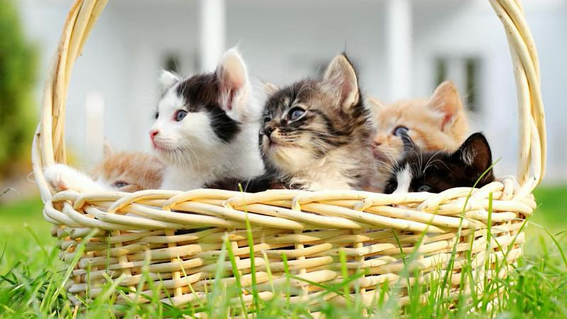 Where to Adopt Kittens for Free | LoveToKnow