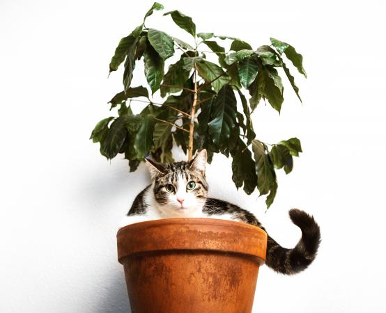 Cat hiding in planter