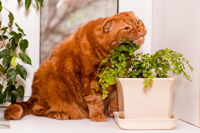 ginger cat chewing on fern