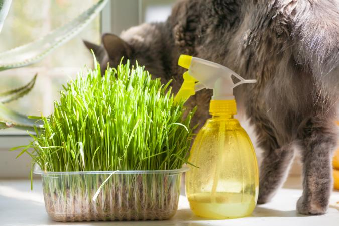 cat with container of grass