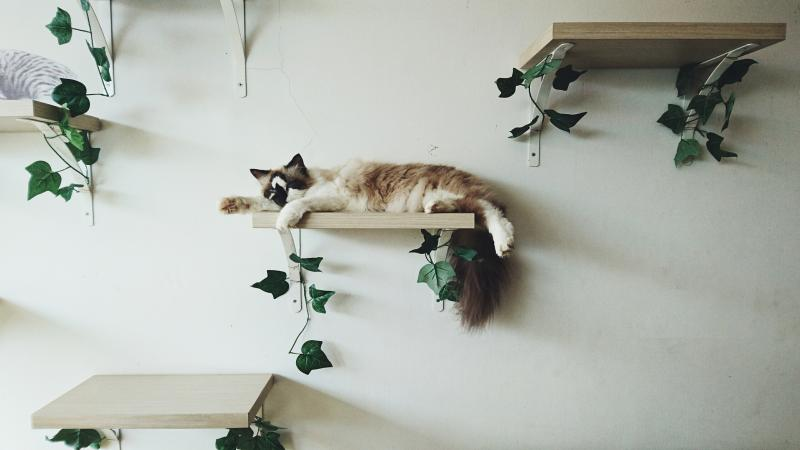 Cat Relaxing On Shelf At Home
