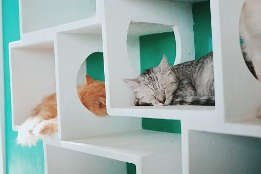 Cats Relaxing In Wall Boxes