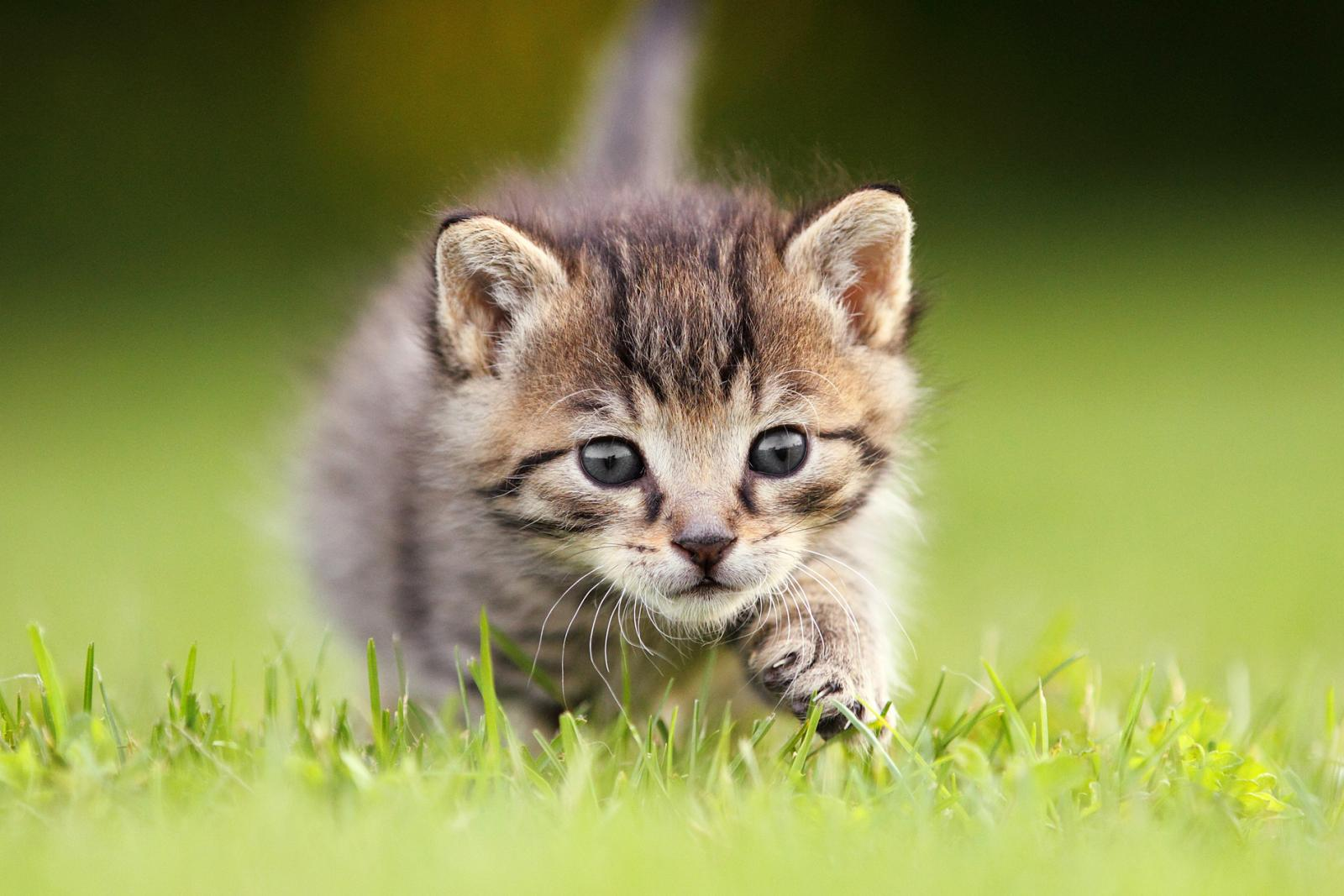 Kitten sneaking up