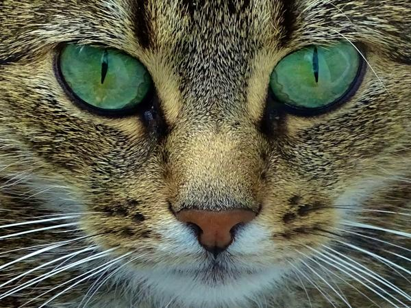 Close-Up Of Cat