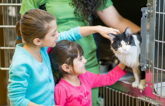 Kids picking a cat to adopt