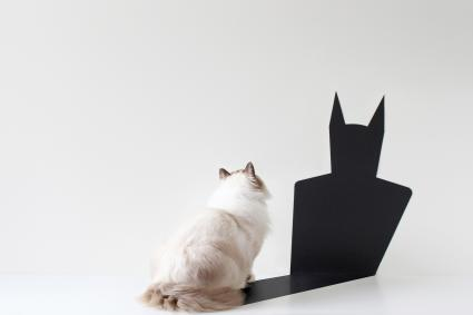 Cat looking at batman shadow