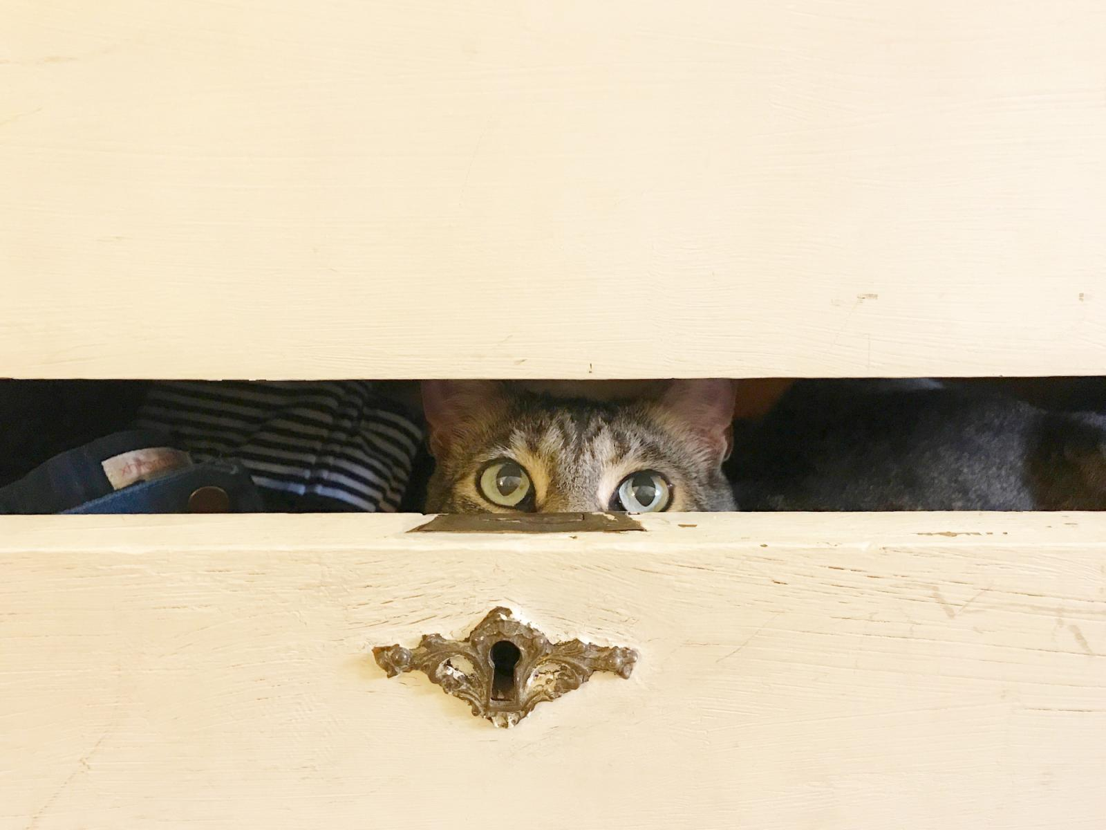 Cat Peeking out of a Dresser Drawer