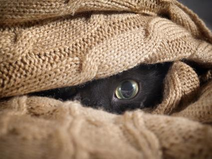 Cat looks out from under knitted blanket