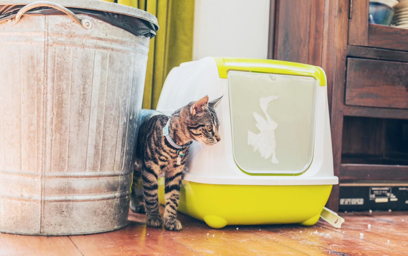 Cat standing alongside a litter box