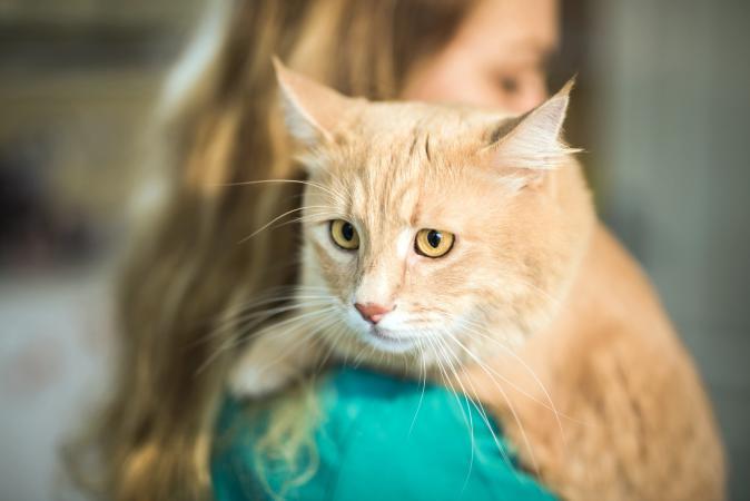 sick cat at vets