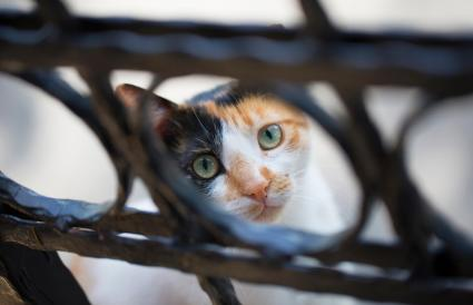 cat looking through fence