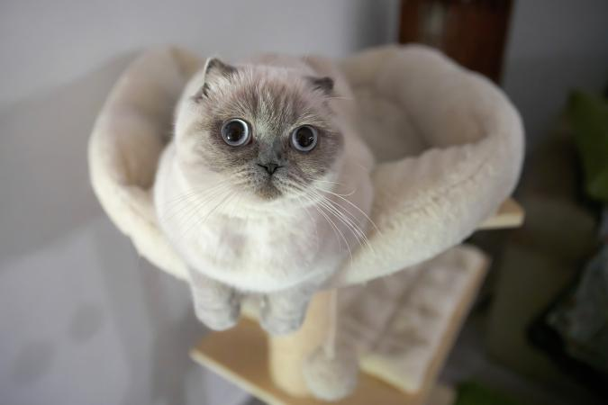 Cat resting in a cat tree