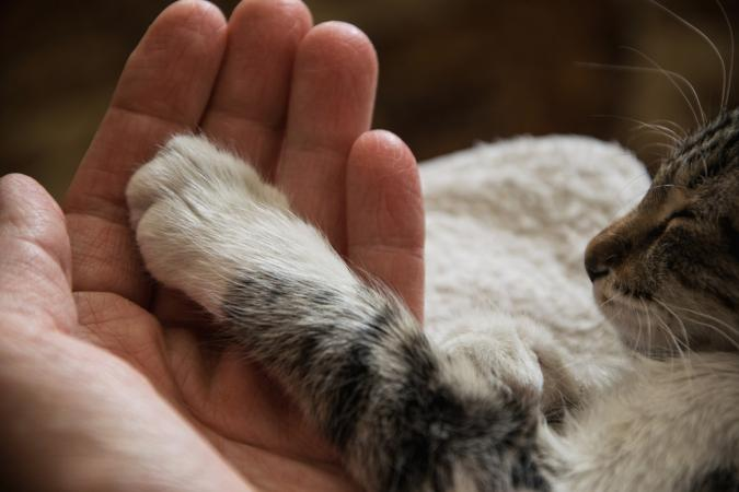 Close-up of cat paw on hand