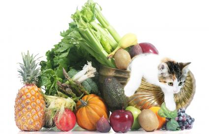 Fruits, vegetables and cat