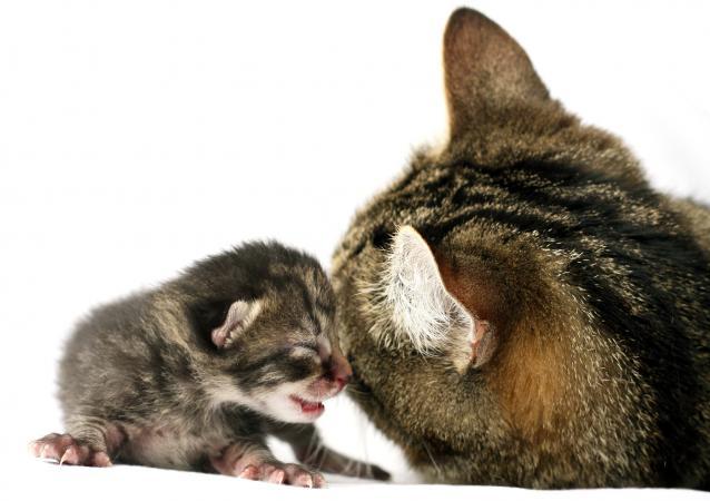 Mother cat tending her newborn kitten