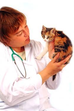 Veterinarian holding up calico kitten
