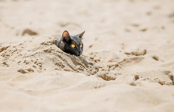 Kitten Lying On Sand At Beach