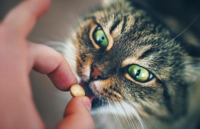 Cat taking a pill