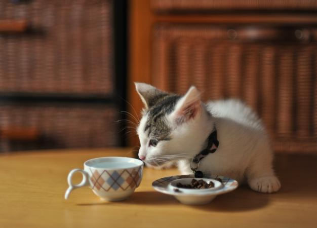 Kitten sniffing a tea cup